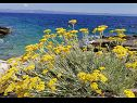 Holiday home Doria H(3+1) Cove Stiniva (Vela Luka) - Island Korcula  - Croatia - flowers